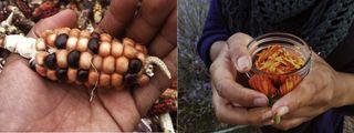 handsharvest1