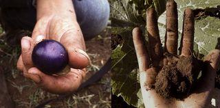 handsharvest3