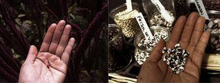 handsharvest2